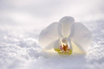 Comment bien entretenir son orchidée été comme hiver : conseils de votre fleuriste