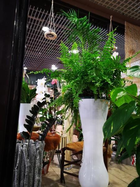 Fleuriste plantes d'intérieur Marseille